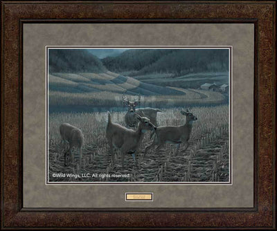 <I>Night Moves&mdash;whitetail Deer</i> Gna Premium+ Framed Print<Br/>29H X 35W Art Collection