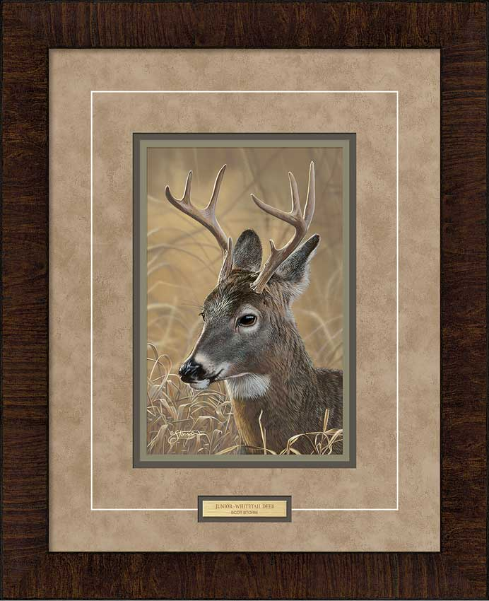 Junior—Whitetail Deer.