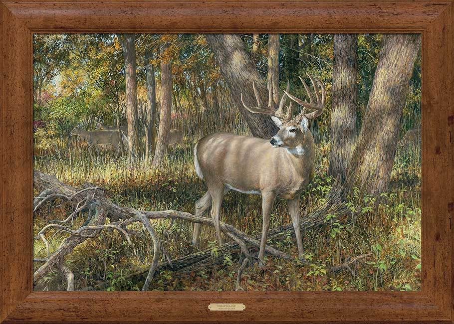 Shadowland—deer Framed Gallery Canvas