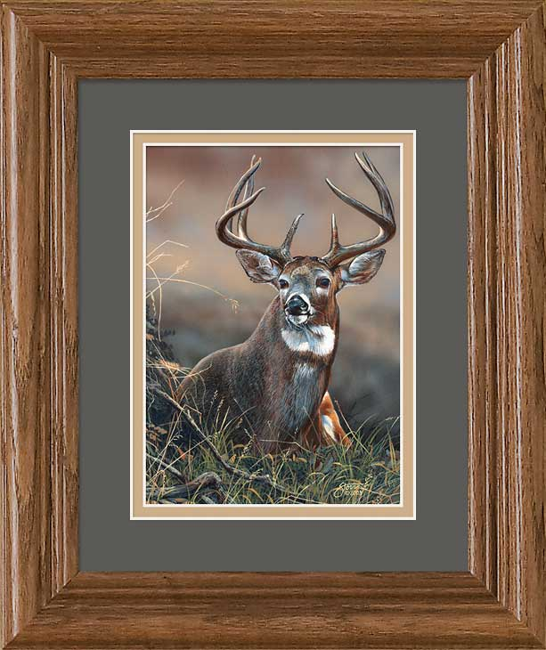 Whitetail Deer Art Collection