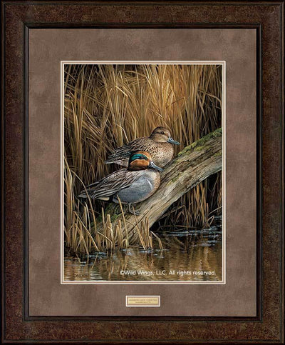<I>Backwaters&mdash;green-Winged Teal</i> Gna Premium+ Framed Print<Br/>35H X 29W Art Collection