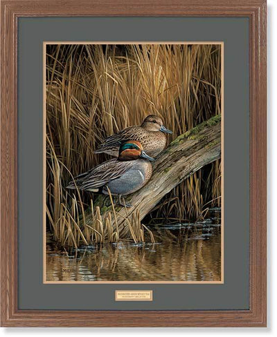 <I>Backwaters&mdash;green-Winged Teal</i> Gna Premium Framed Print<Br/>31H X 25W Art Collection