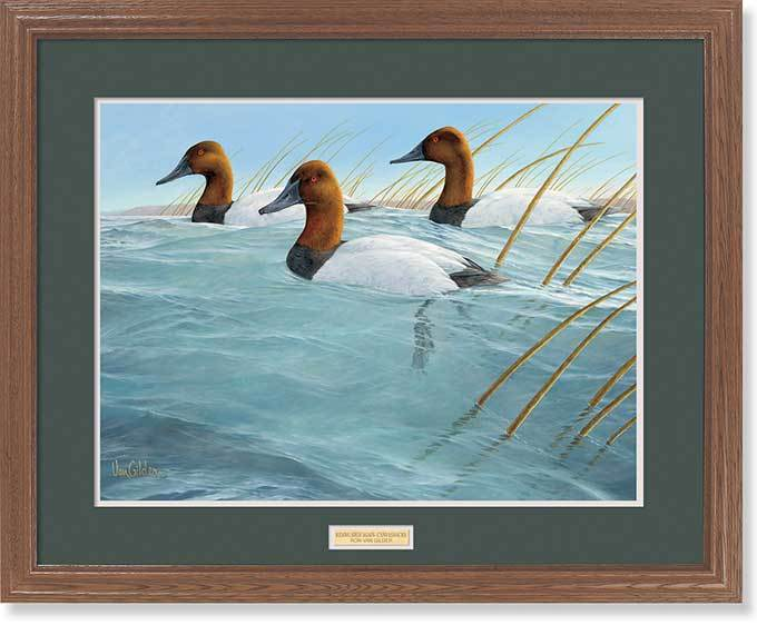 Riding High Again—canvasbacks Gna Premium Framed Print