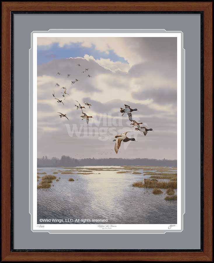 Rippin' the Dawn-Ducks Art Collection