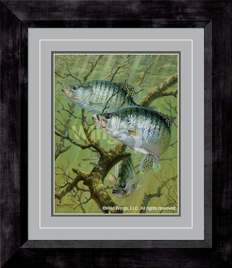 Brush Bite-White Crappie Art Collection