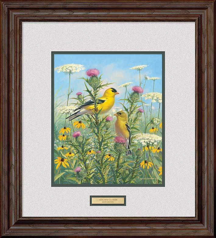 Golden Glories—Goldfinches.