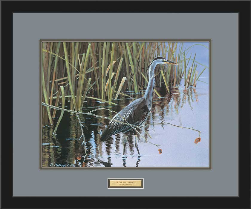 <i>Great Blue Heron</i>