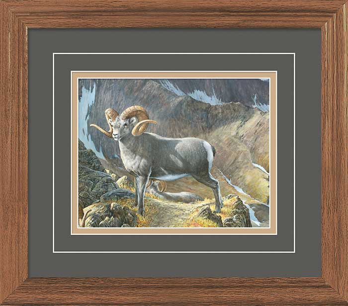 The Pinnacle-Bighorn Ram Limited Edition Print