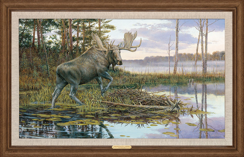Backwater Bull—Moose.