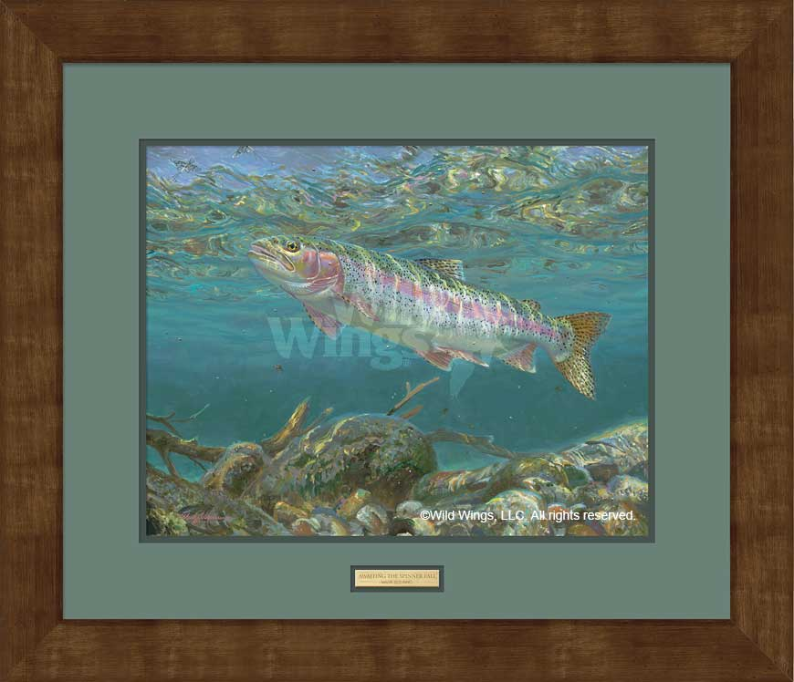 Awaiting the Spinner Fall-Trout Art Collection