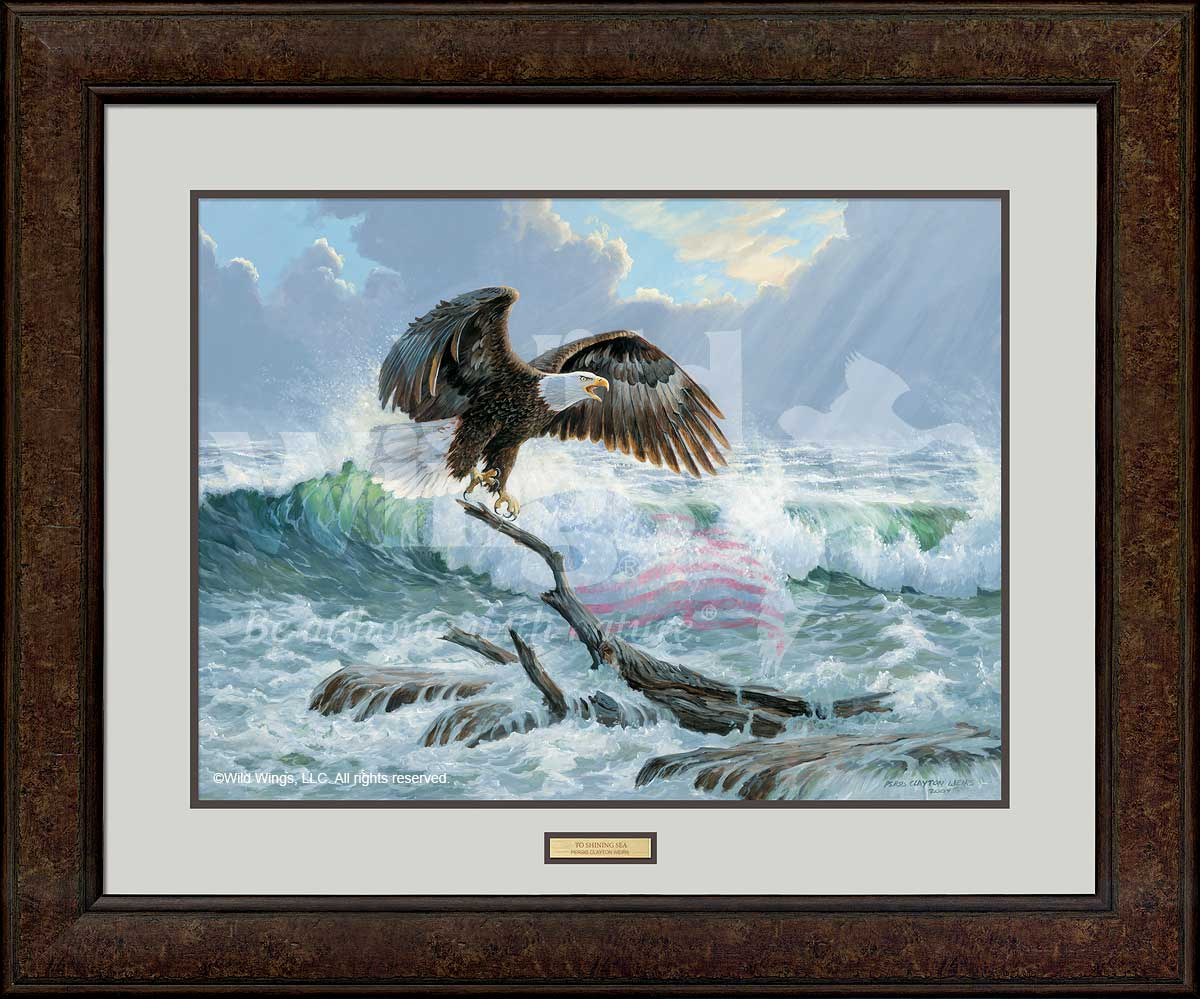 To Shining Sea-Bald Eagle Art Collection