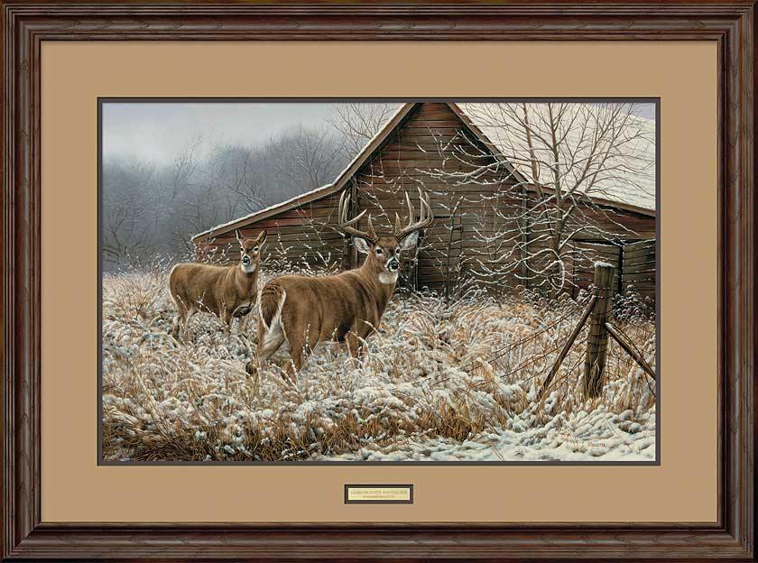Chance Encounter-Whitetail Deer Art Collection
