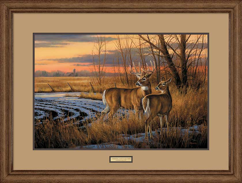 Daybreak-Whitetail Deer Art Collection