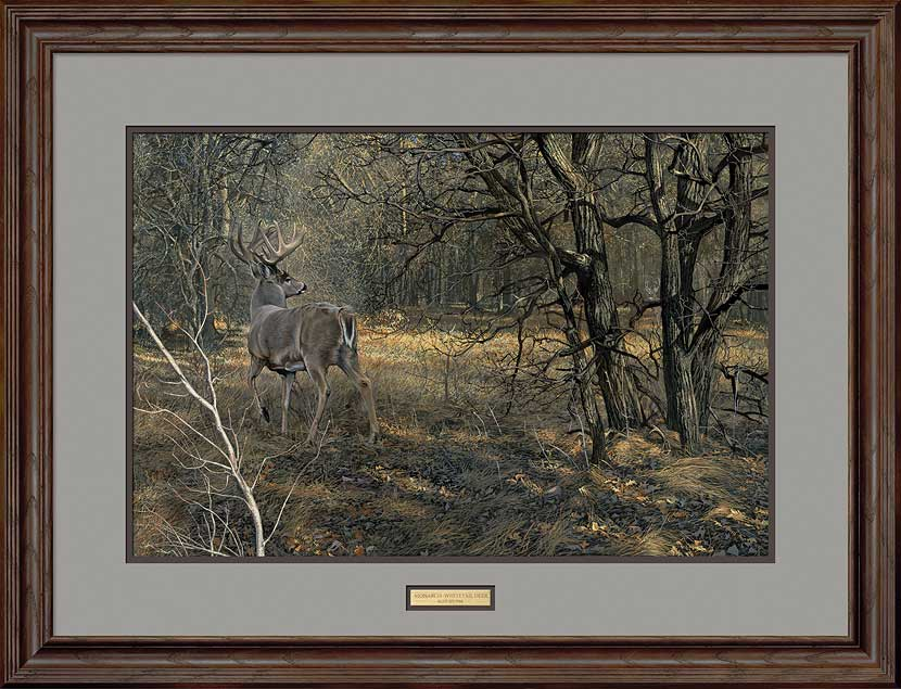 Monarch—Whitetail Deer.
