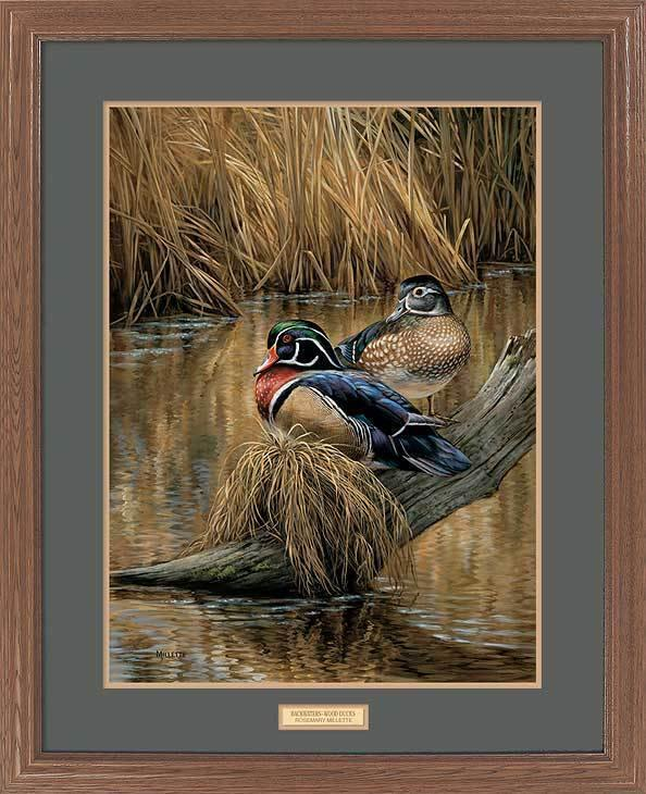<I>Backwaters&mdash;wood Ducks</i> Gna Premium Framed Print<Br/>31H X 25W Art Collection
