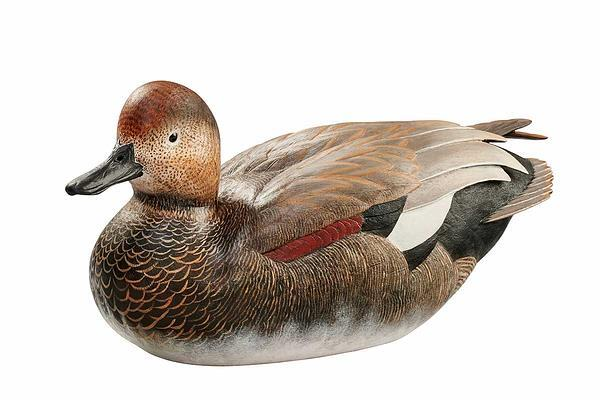 Gadwall Drake Small Decoy
