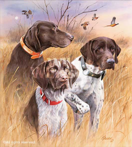 Great Hunting Dogs—German Shorthair Pointers.