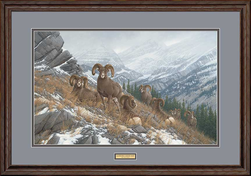 Glacier Kings Bighorn Sheep Art Collection