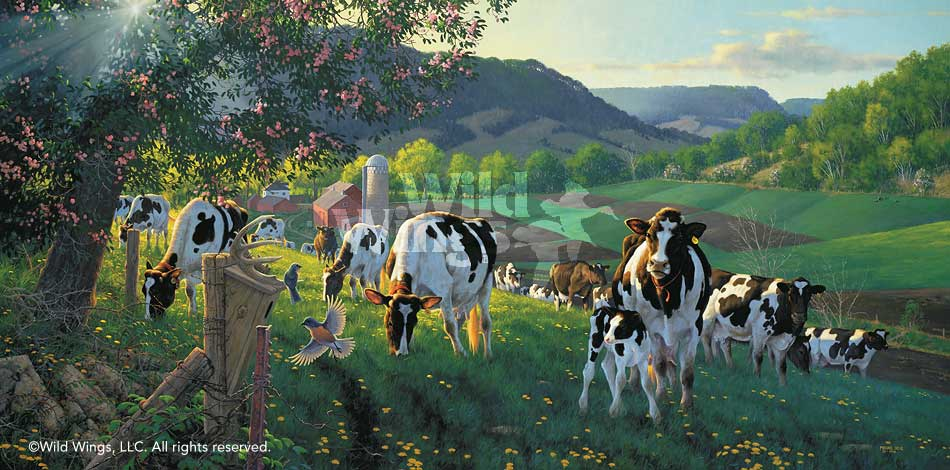 God's Country-Cows Art Collection