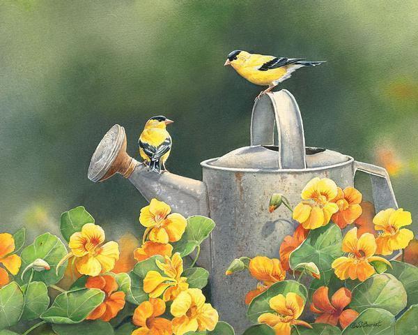 Goldfinches & Nasturtiums Print<Br/>12H X 15W Art Collection