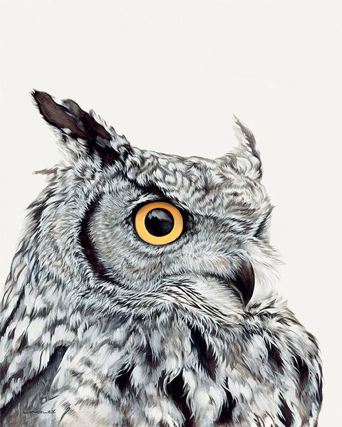 Great Horned Owl—White.
