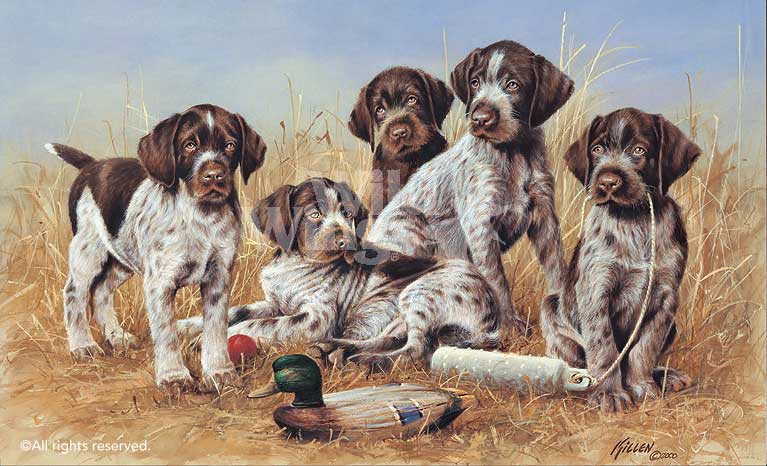 Great Hunting Puppies-Drahthaars Art Collection