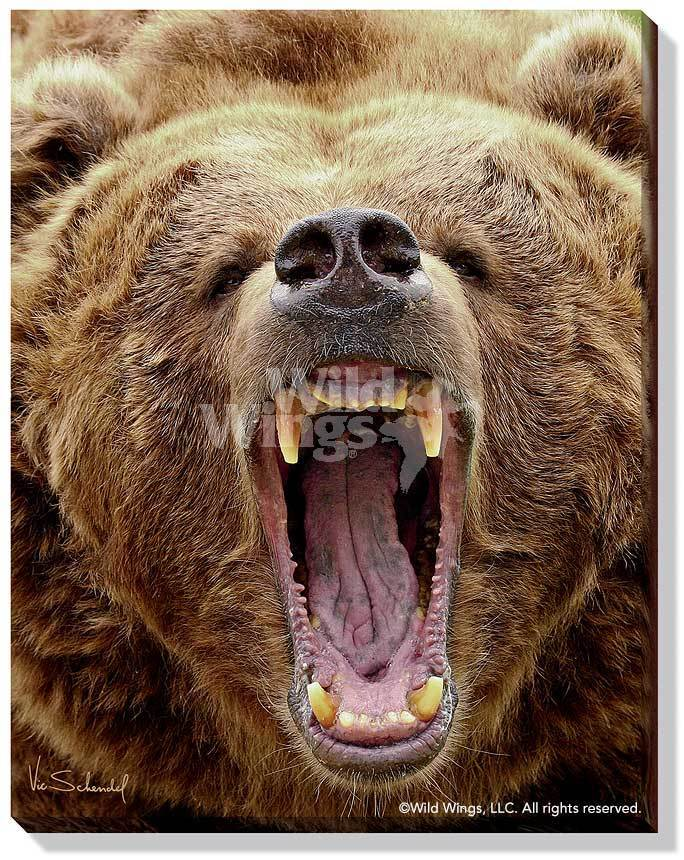 Roar—Grizzly Bear.