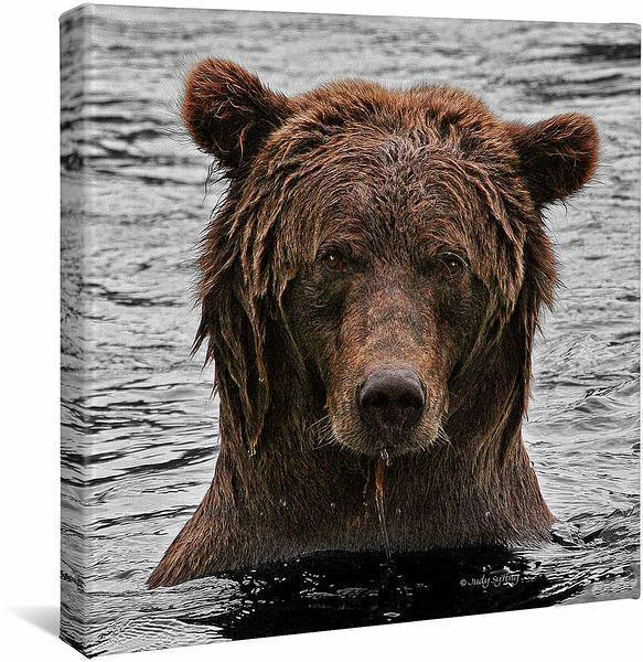 <I>Grizzly Bear Stare</i> Gallery Wrapped Canvas