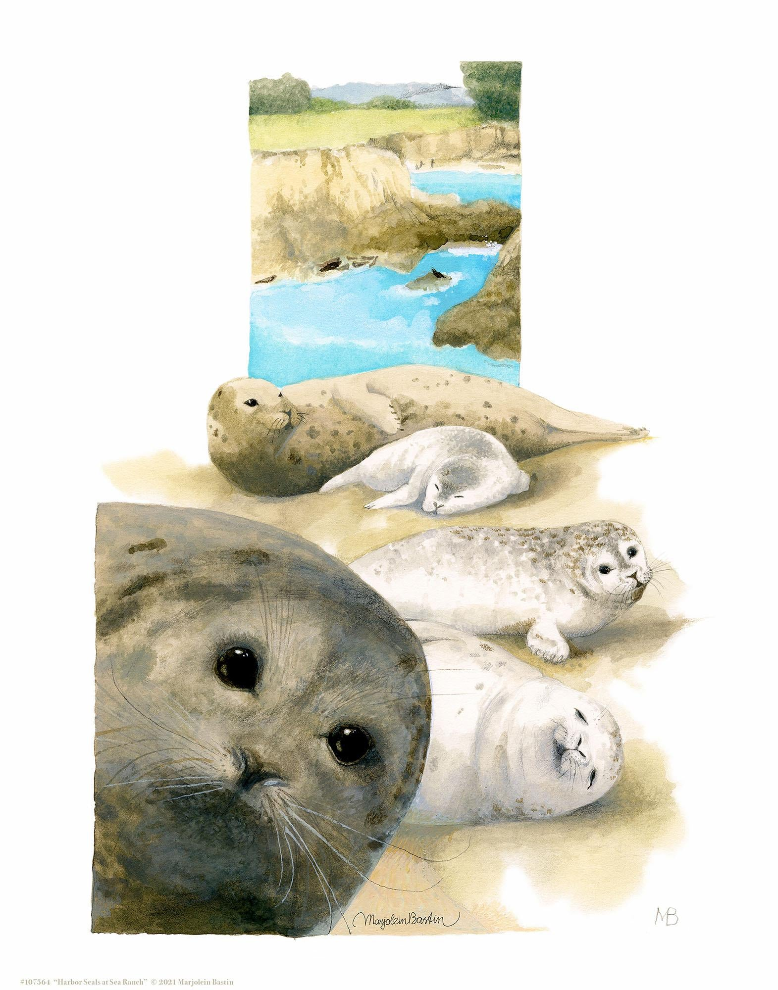 Harbor Seals at Sea Ranch Art Collection