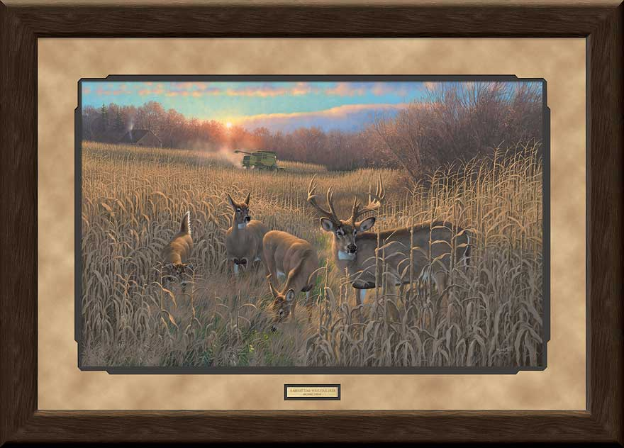 <i>Harvest Time&mdash;Whitetail Deer</i>