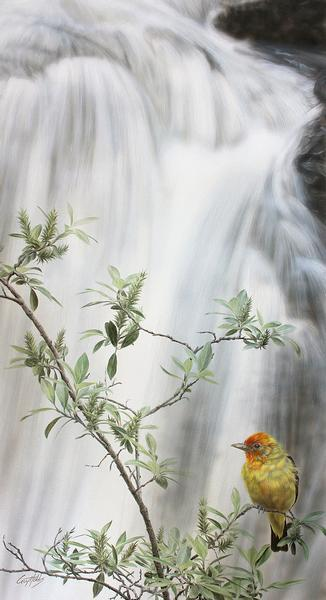 Head of the Falls—Western Tanager.