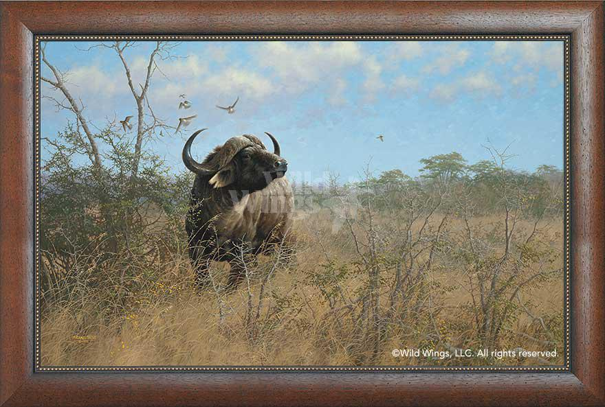 Heart of Darkness—Cape Buffalo.