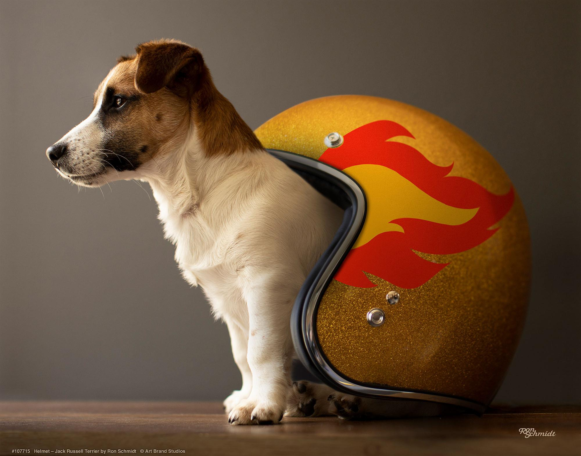 Helmet-Jack Russell Terrier Art Collection