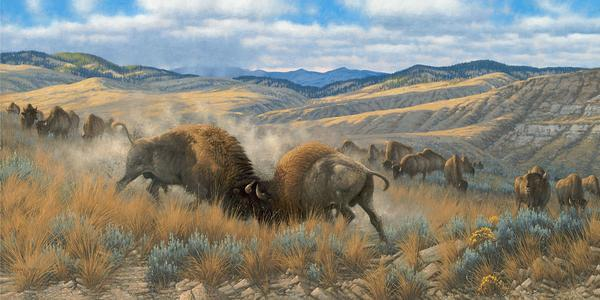High Plains Battle—Bison