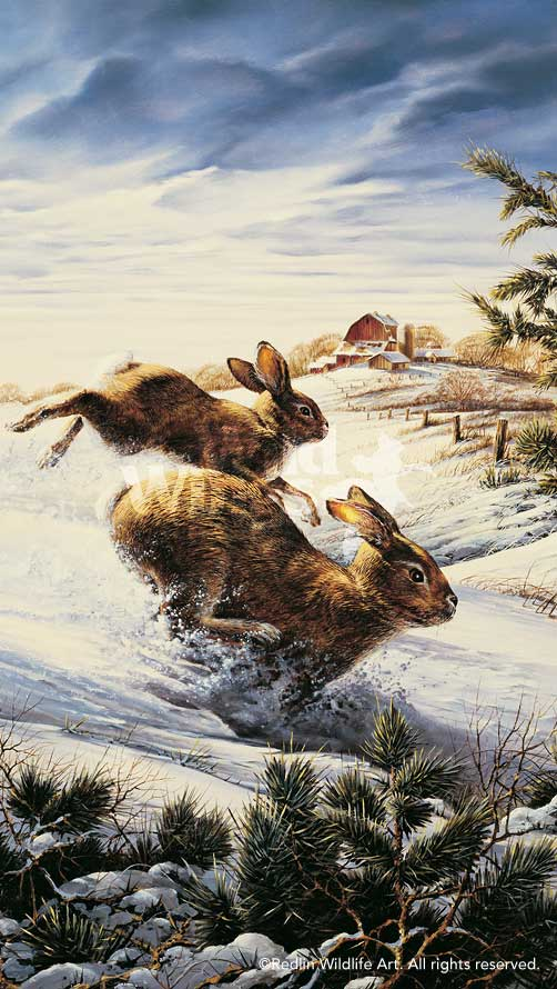 Hightailing—Rabbits.