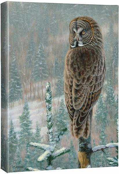 His Land—Great Gray Owl.