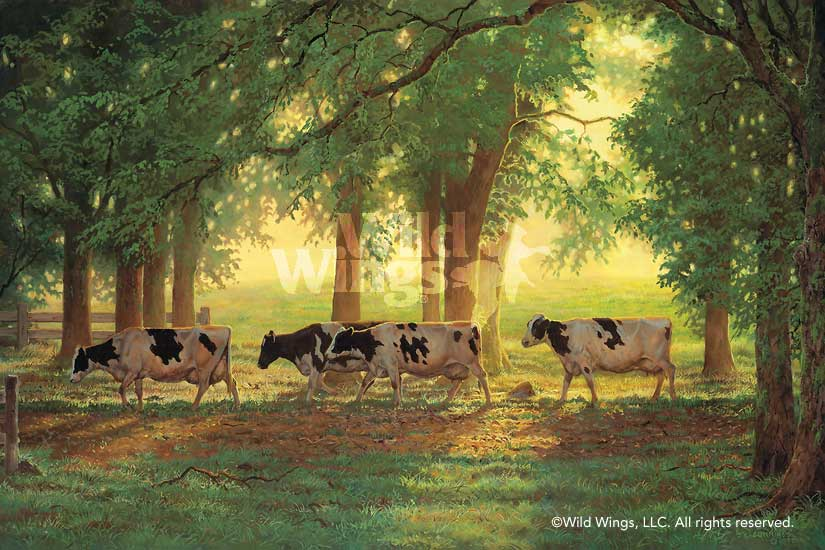 Heading Home—Cows.