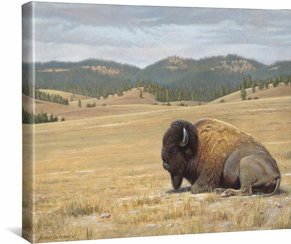<I>Home Again&mdash;bison</i> Gallery Wrapped Canvas