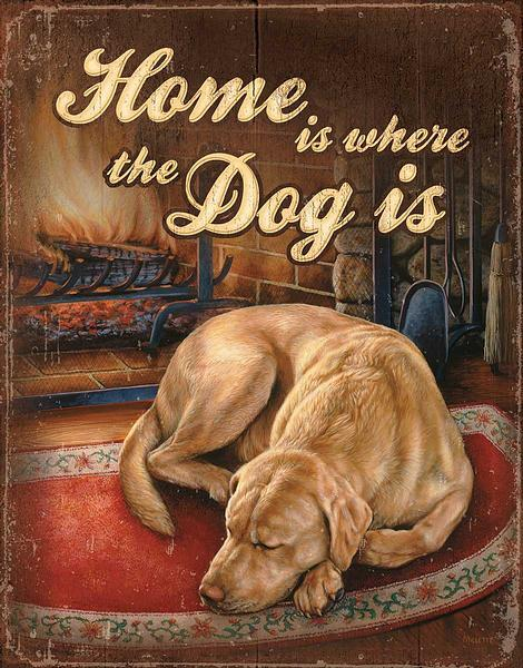 Home Is Where The Dog Is Tin Sign