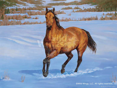 Quarter Horse-Buckskin Art Collection