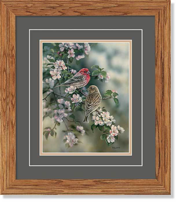 <I>House Finches</i> Gna Deluxe Framed Print<Br/>18.5H X 16.25W Art Collection