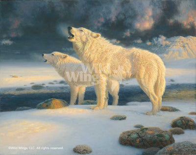Arctic Echoes-Wolves Art Collection