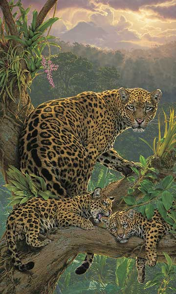 Family Tree—Jaguars.