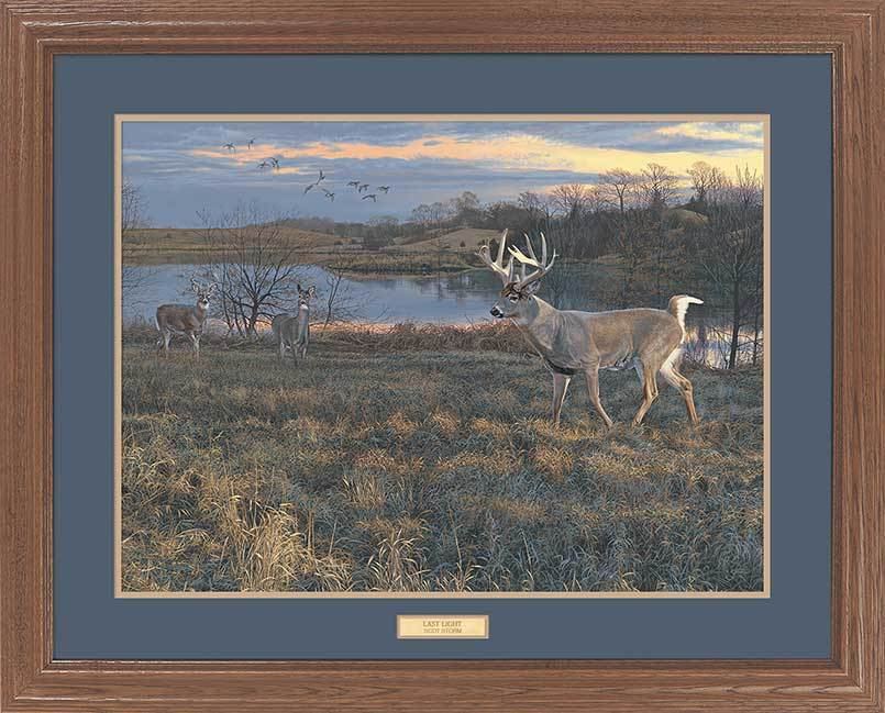<I>Last Light&mdash;whitetail Deer</i> Gna Premium Framed Print