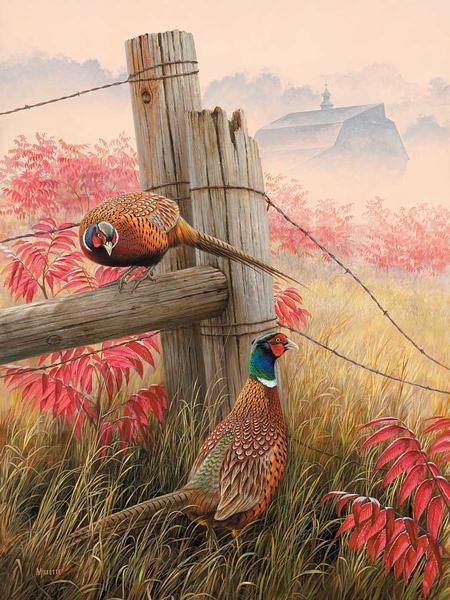 Lifting Fog—Pheasants.