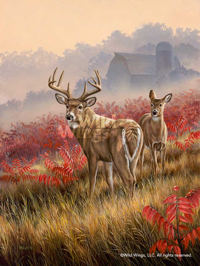 Lifting Fog-Whitetail Deer Art Collection