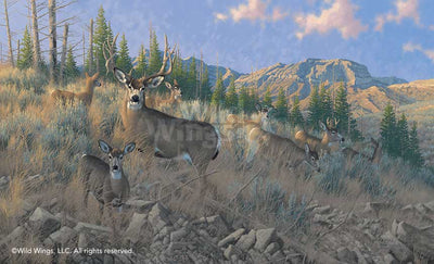 <i>The Magic Hour&mdash;Mule Deer</i>