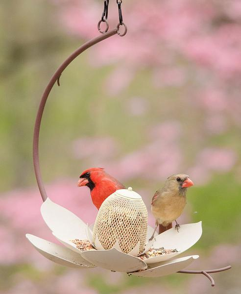 Magnolia Bird Seed Feeder