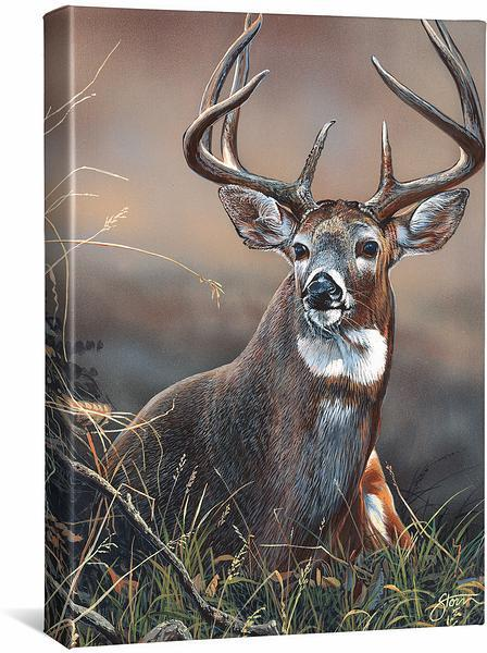 <I>Majestic&mdash;whitetail Deer</i> Gallery Wrapped Canvas