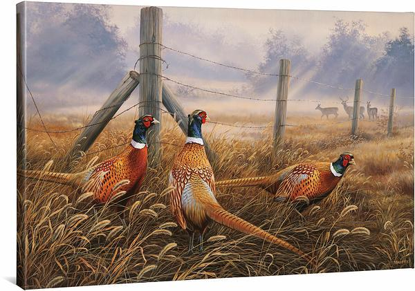 Meadow Mist—Pheasants.
